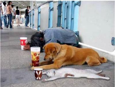 Afrontando la crisis con mascotas