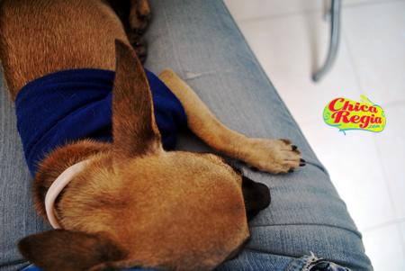 Mi mascota Pabo y mi radio online